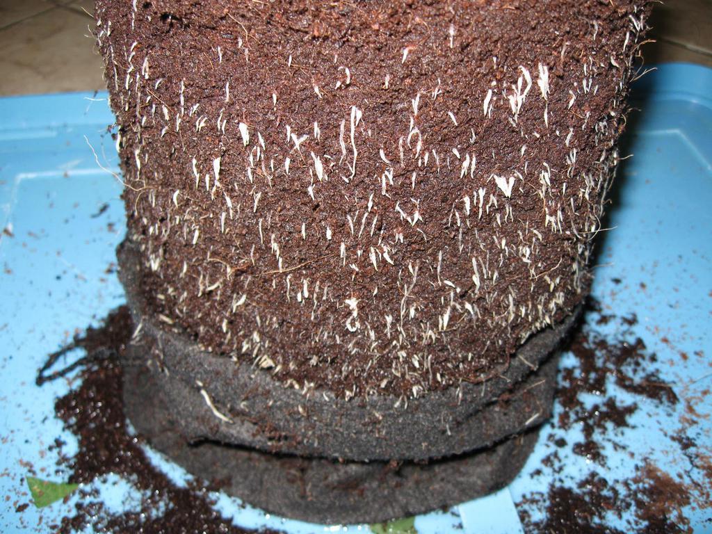 roots_smartpot