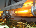 cannabis-lighting-300x218