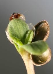 seedlingtwee