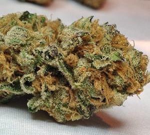 Girl Scout Cookies, de volgende grote cannabishit die de wereld gaat veroveren?