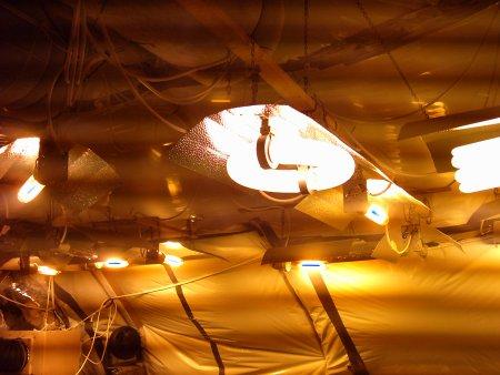 inductielamp kweekruimte