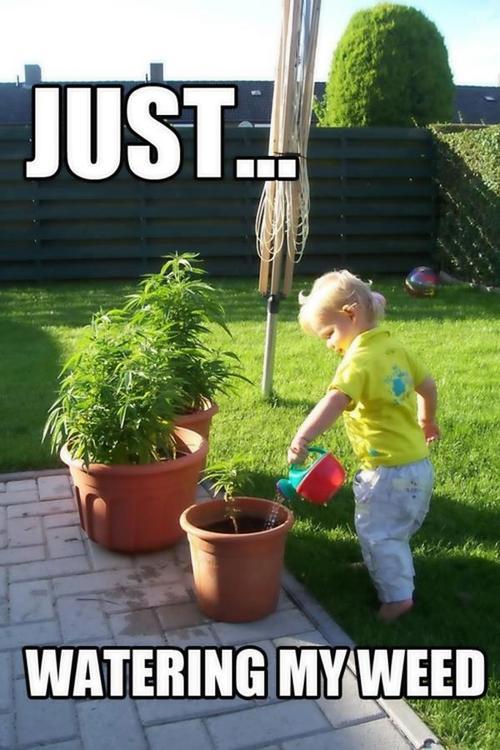 watering-weed-marijuana