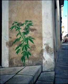 Er bestaat een levendige tegencultuur van cannabisgebruik in Frankrijk