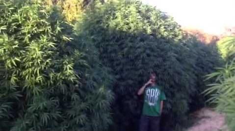 Buiten kweken kan en mag onder het motto 'hoe groter hoe beter'...