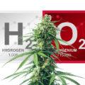 Waterstofperoxide voor wietplanten