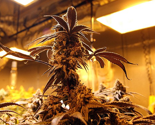 Binnen kweken is wat beter opletten, maar betaal nooit zomaar de schikking van het OM, de rechter oordeelt vaak milder bij maximaal 5 plantjes...