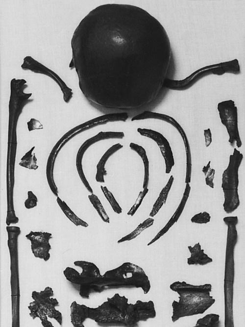 Het skelet van 1 van de 2 Viking-vrouwen uit het schip