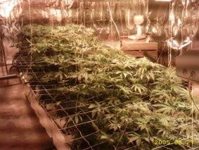 1844_indoor-grow-room
