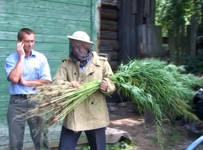 Agent ruimt wietplanten noodgedwongen met een imkerpak