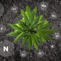 CaNNaBiS kweekcursus #6: plantenvoeding
