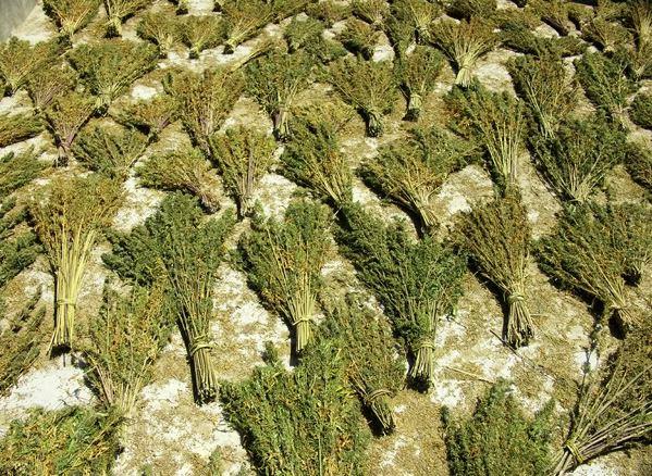 drogen in marocco
