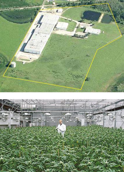 Op haar website laat GrowHealthy trots het perceel in Florida zien wat is gekocht en wat er mee moet gaan gebeuren: wiet kweken!