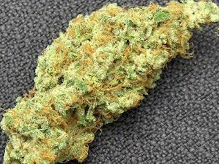 white-russian-marijuana-strain-1