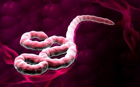 Zo ziet het verwoestende ebola virus eruit