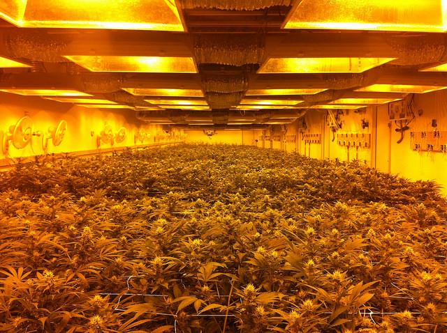Een wietfabriek in Denver. Zo zullen er steeds meer gaan komen. Beeld: Bex Whitfield