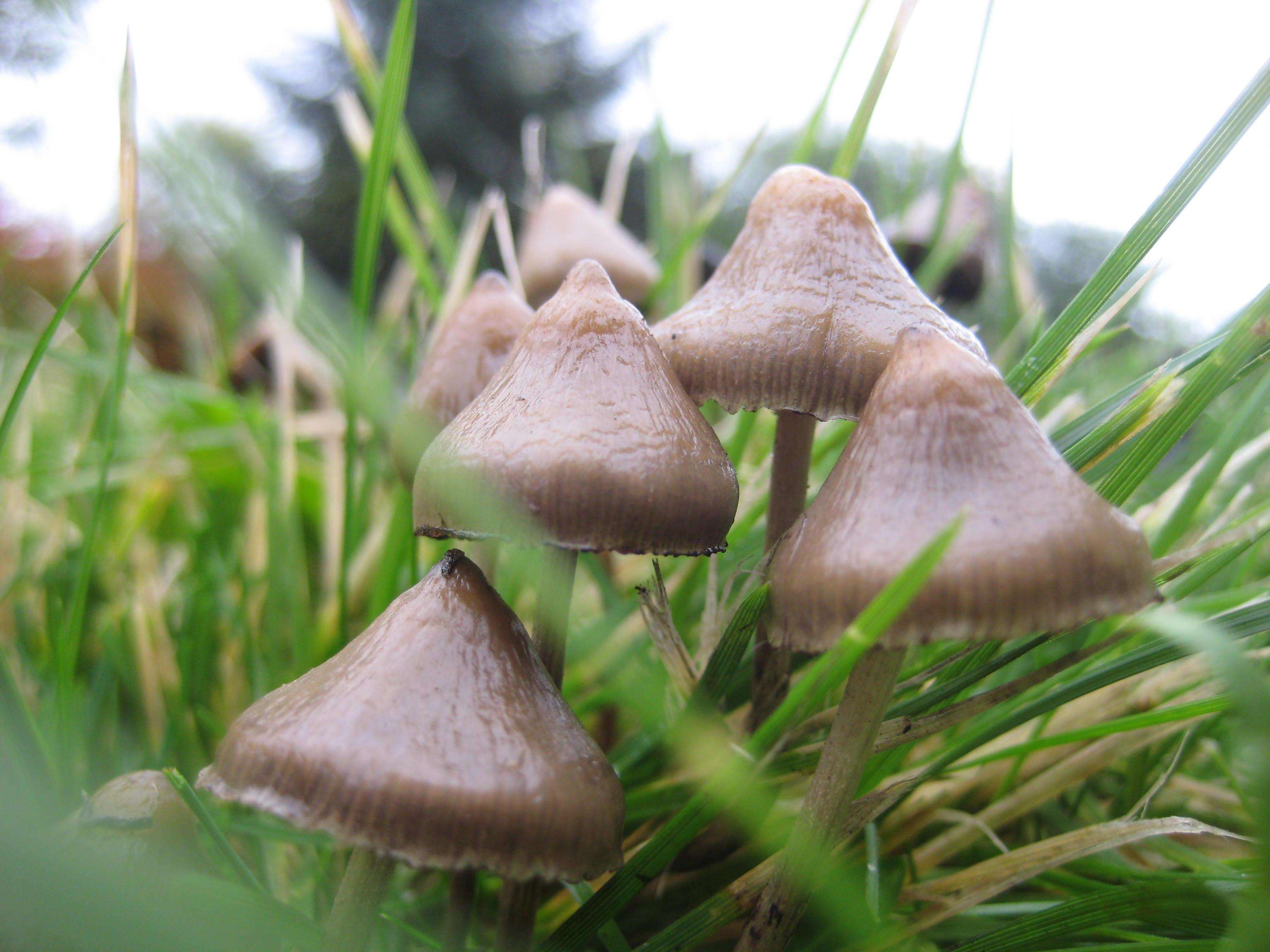 Men kan het niet nalaten om zich af te vragen naar wat voor paddenstoelen ze op zoek waren...