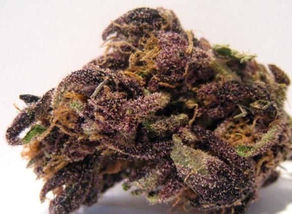 purplemonkeyballs