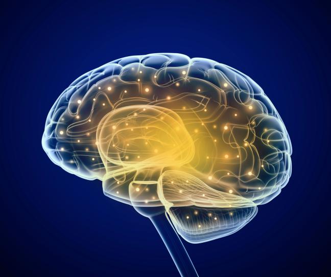 actief hersenen