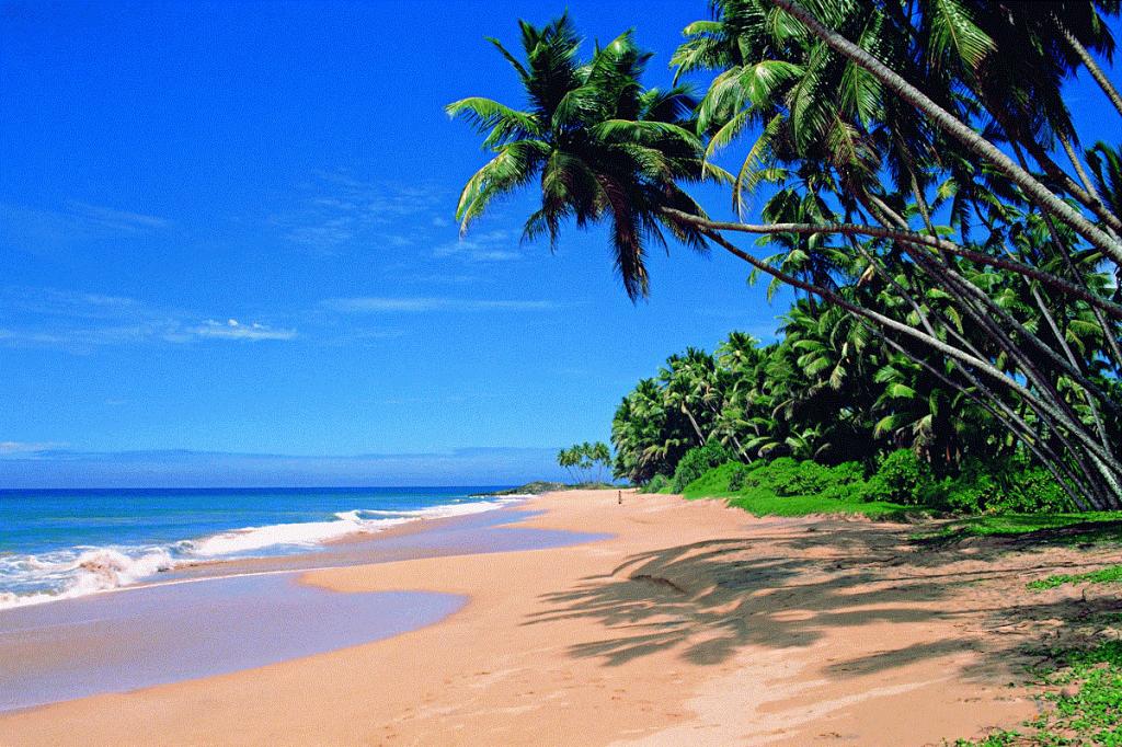 goa strand palmen