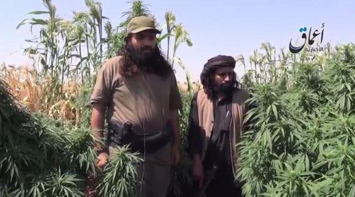 Islamitische Staat, net als minister Opstelten geen vriend van de wietplant...