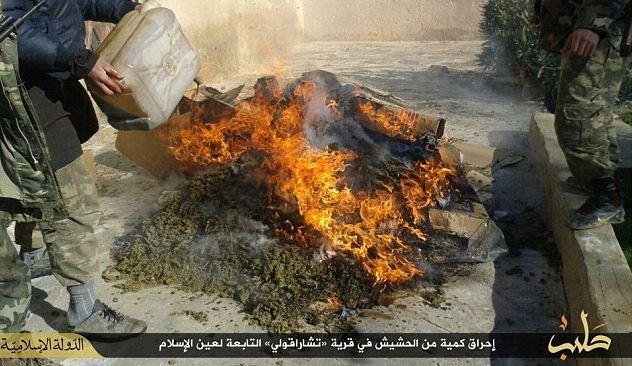 Net als Ivo Opstelten is IS groot fan van het vernietigen van wiet...