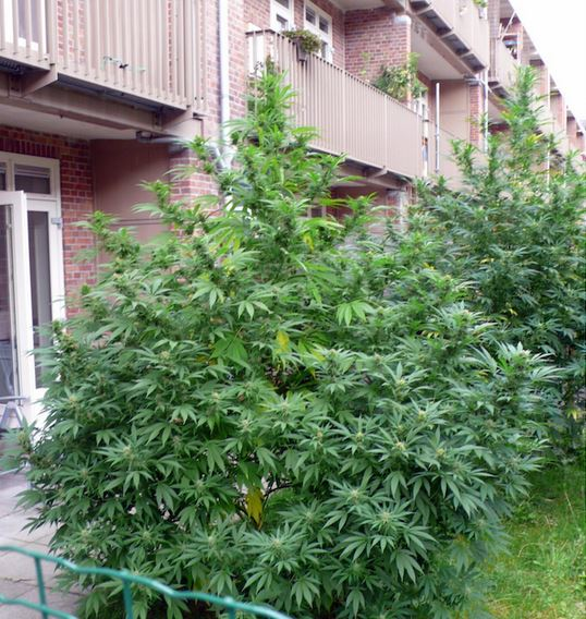 grote plant 2