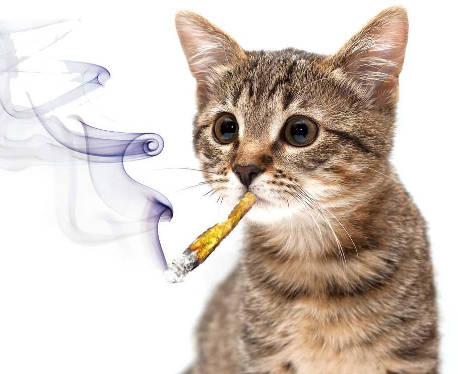 pot-smoking-cat630