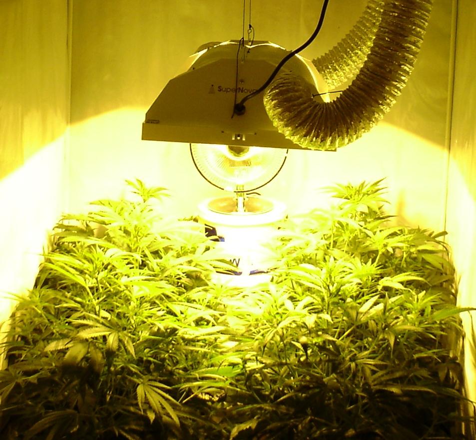 Ongekend Hang je kweeklamp op de juiste hoogte - CNNBS.nl CR-84