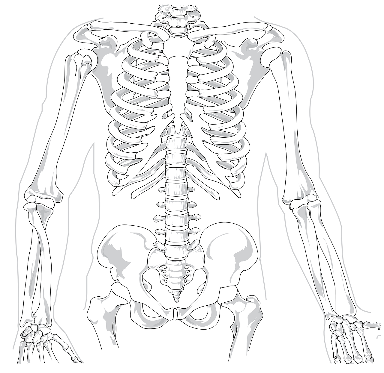 skeleton-41569_1280