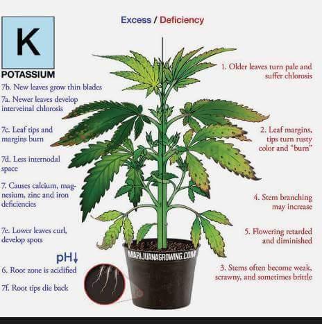 Kalium planten