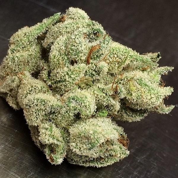holy-grail-og-marijuana-strain-2