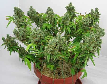 flowering-plant-training-sm