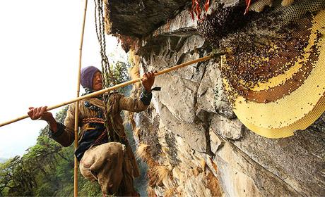 foto de Van deze honing ga je hallucineren - CNNBS.nl