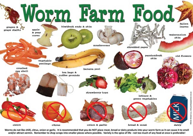 worm-food-poster