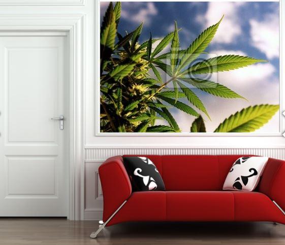 Fleur je huis op met wiet foto 39 s for Pixers your walls and stuff