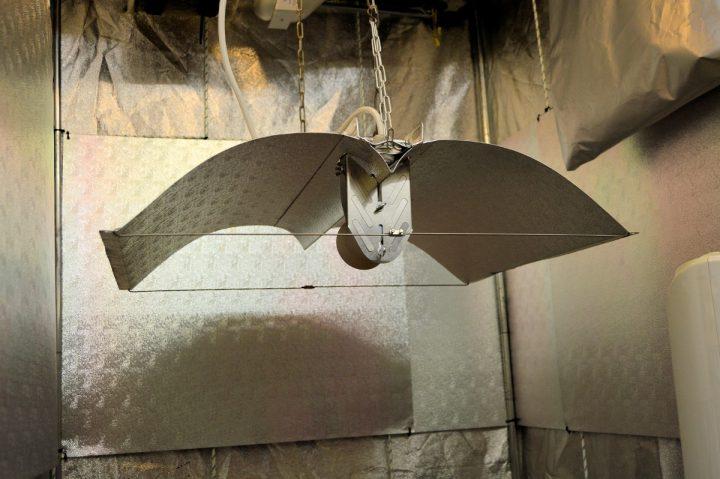 wing onder (Custom)