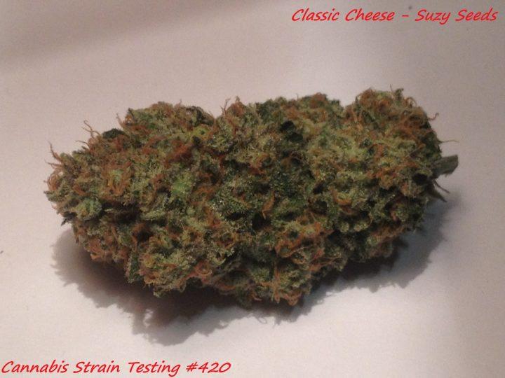 Classic Cheese #bud Suzy Seeds