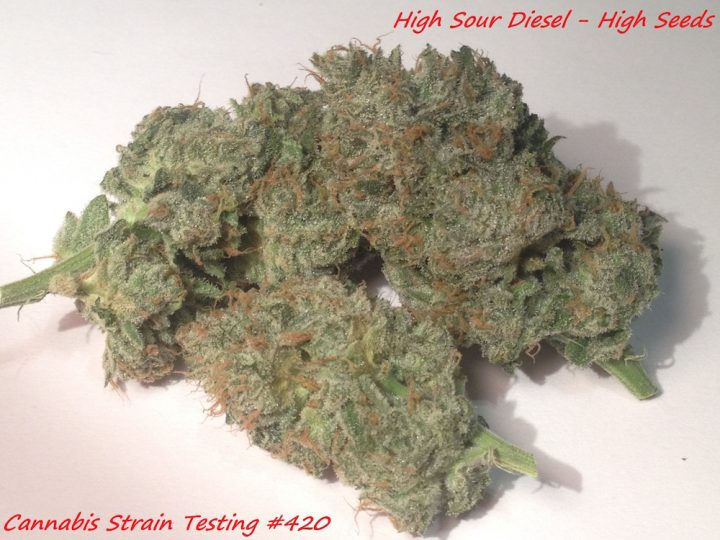 High Sour Diesel #bud High Seeds