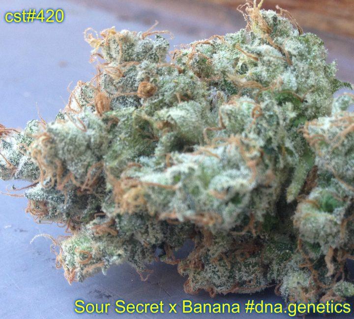 Sour Secret x Banana