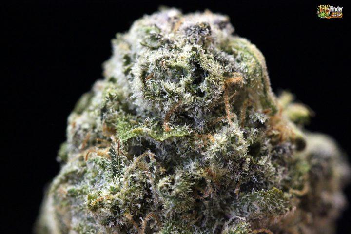 kryptonite-marijuana-large-nug-thcfinder-00403911