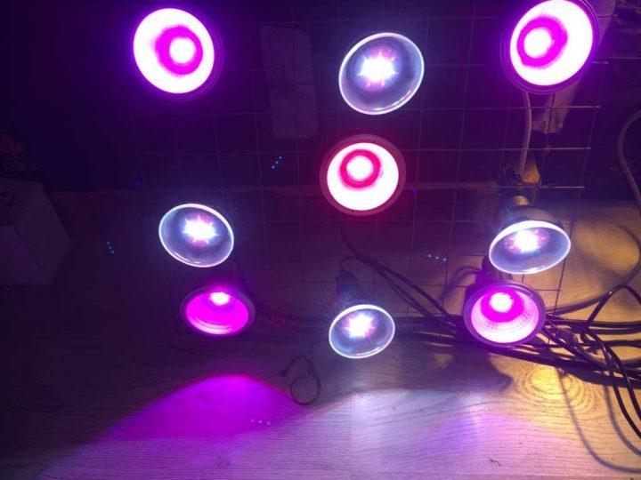 Minnie's 5 paarse leds van 14 Watt en de 4 witte ledspots van 18 Watt.