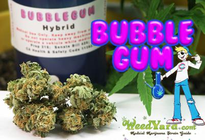 bubblegum-main