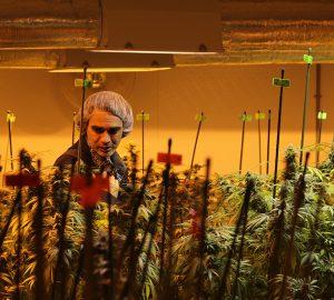 Matt bij Peace Naturals, de Canadese wietproducent waar hij oa kweekspecialist is.