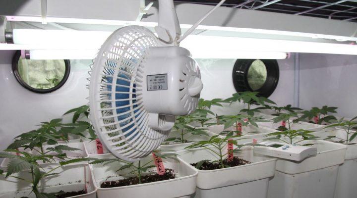 Zet je planten in beweging met een briesje.