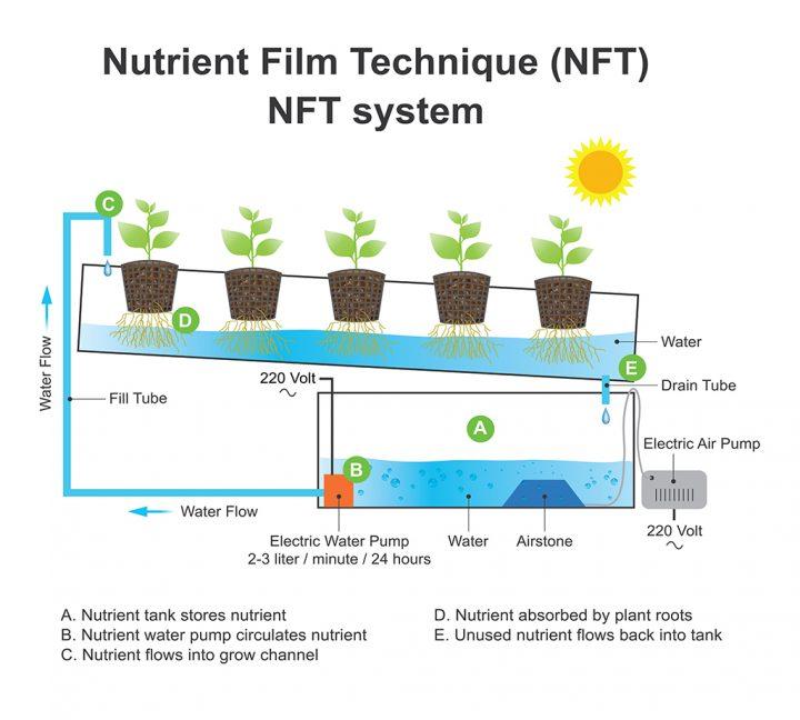 Een schematische weergave van een NFT-systeem. Wortels worden continue blootgesteld aan stromend water en zuurstof. Beeld: Artwork studio BKK, Shutterstock