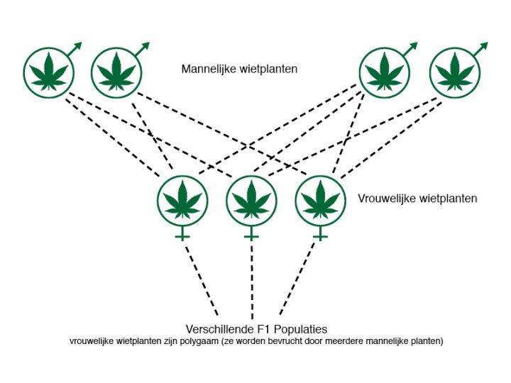 Natuurlijke selectie: De natuurlijke selectie gaat via onbekende mannelijke donoren.