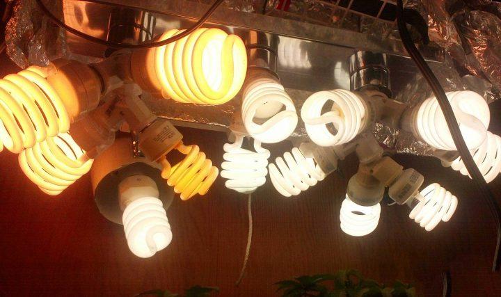 Spaarlampen zijn uitstekende kweeklampen, ze zijn alleen niet zo krachtig.