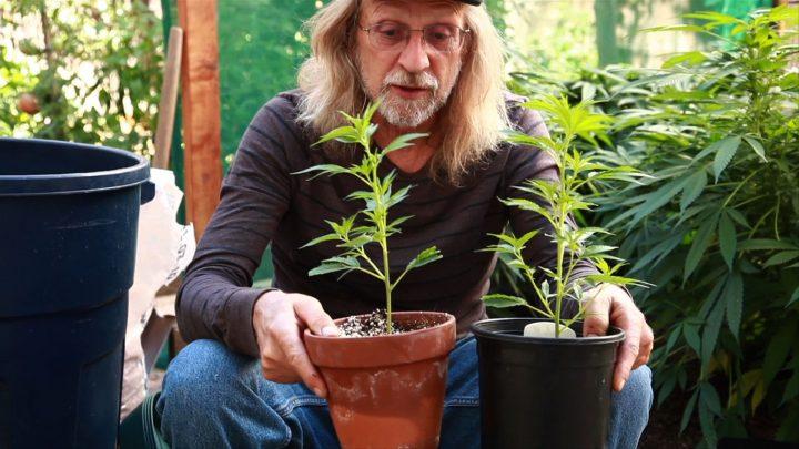 Cannabisgoeroe Jorge Cervantes vertelt over het verschil tussen terracotta potten en plastic potten.