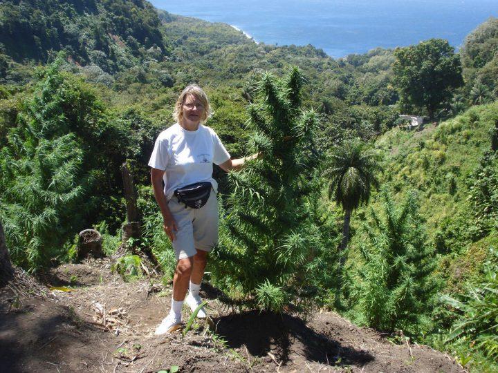 Sativa's op Hawaii, niet ver van de evenaar. Deze soorten houden van veel licht.