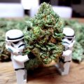 Humor - Dieven stelen wietplanten terug uit politiebureau!
